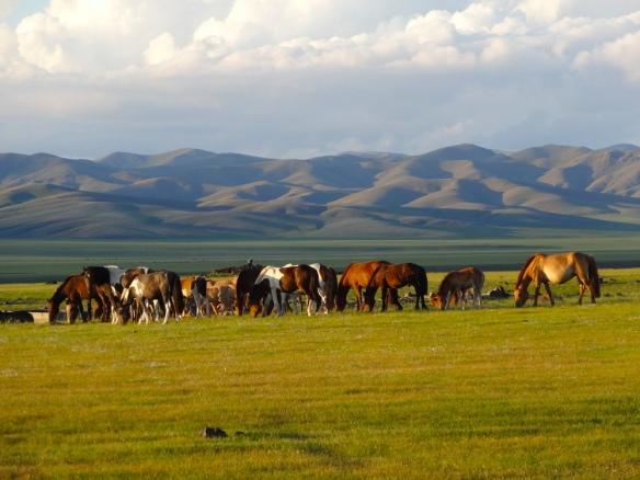 before sunset Mongolia